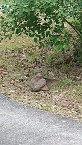 ウサギくつろぎ中