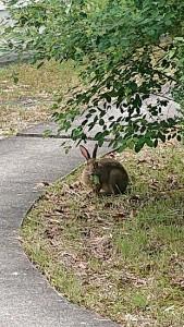 ウサギ食事中