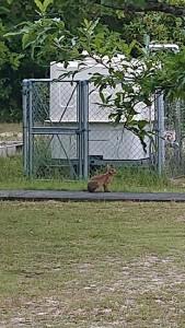 ウサギ2匹目
